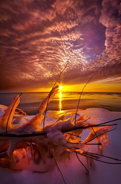 ~~Became Entwined | winter sunrise on the shores of Lake Michigan | by Phil Koch~~