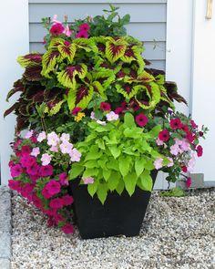 A crescent garden container filled with coleus, petunias, new guinea impatiens, mandevilla, and potato vine.
