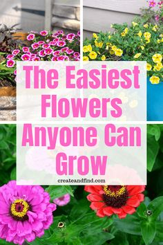 The easiest flowers to grow and they're cheap too!  Gorgeous flowering blooms that you can have all summer for very little time or money #flowers #gardening #easyflowerstogrow #plants