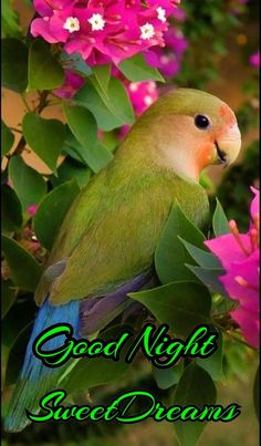 What do you think, Nice Puppy padlocked all its boards . Tropical Birds, Exotic Birds, Colorful Birds, Good Night Gif, Good Morning Gif, Animals Of The World, Animals And Pets, Beautiful Birds, Animals Beautiful