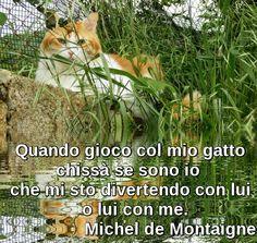 When I play with my cat, who knows if I am  I'm having fun with him, or he with me.  Michel de Montaigne (Quando gioco col mio gatto, chissà se sono io  che mi sto divertendo con lui, o lui con me)