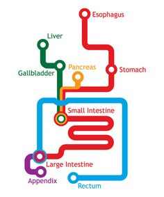 Gastrointestinal Metro - always good to know where to situate the obstruction.
