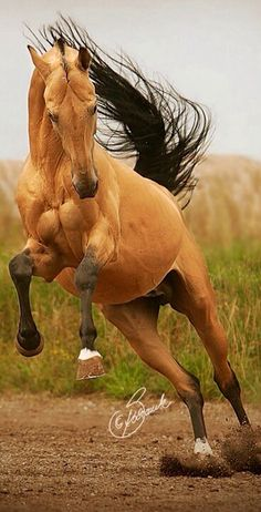 Horse having fun.