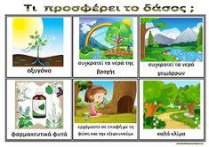 Το νέο νηπιαγωγείο που ονειρεύομαι : Πίνακες αναφοράς για το δάσος Forest Theme, Environmental Education, Holidays And Events, Trees To Plant, Kindergarten, Activities, School, Children, Plants