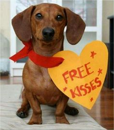 Nationwide List of Dachshund Rescues