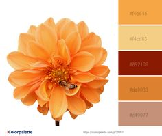 Color Palette Ideas from Flower Orange Flowering Plant Image Orange Flowering Plants, Color Combinations, Color Schemes, Orange Color Palettes, Plant Images, Color Swatches, Color Inspiration, Planting Flowers, Beautiful