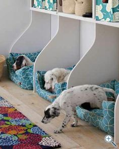 Dog beds and shelves