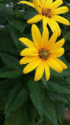 Herbal Remedies, Natural Remedies, Diy Aloe Vera Gel, Herb Farm, Herbalism, Herbs, Education, Apothecary, Nature