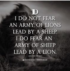 Army of sheep led by a lion