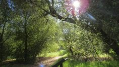Oak Oasis included on list of lonely hikes in San Diego county