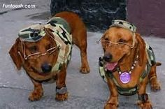 military dogs - Bing Images