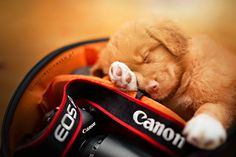 Dogs Sleeping in Camera Bag