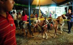 Ponies Used for Children's Carousel Rides are Being Abused.....they need to be sued for animal cruelty!!!!! The horses should be taken to a rescue!!!!