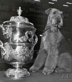 Celebrating 125 years of Crufts - 1986 Best in Show Ginger Xmas Carol