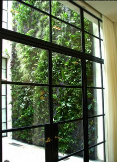 steel windows with french doors