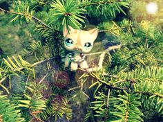 Lps a day at the mountains