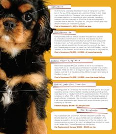 5 Common Pet Health Conditions In Cavalier King Charles Spaniels + Their Cost Of Treatment