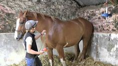 teach your horse to be clipped