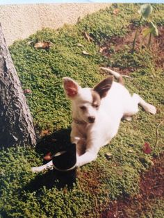 Our Lily as a Puppy... she is most def a gift from above.