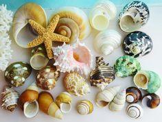 Hermit Crab Shells  Hole Openings S .50  by BeachCottageBoutique