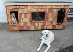 Belle, Troy, & Lucy - Washington:  several years of being tried and tested, this dog house has been proven to be the most comfortable and the safest home you can build for your beloved dogs.