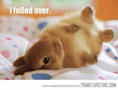 Upside down cuteness overload…