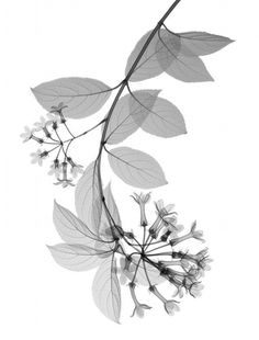 X-Ray Photographs Of Flowers Expose The Transient Magic Of The Everyday