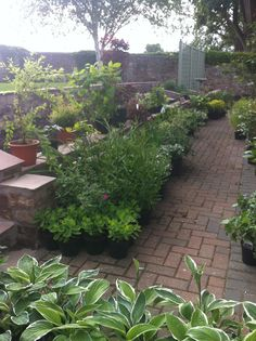 Waiting to be planted in a garden designed by Goose Green Design