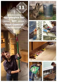 11 Strategies for Do-It-Yourself Pest Control