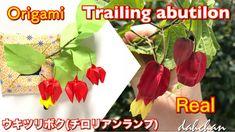 折り紙 ウキツリボク(チロリアンランプ)☆Origami Trailing abutilon Tutorial