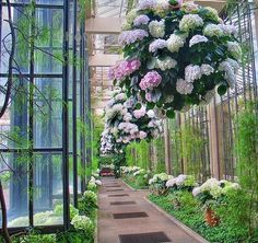 hanging hydrangeas in Paris  via Belclaire House jane_melani