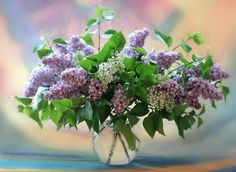 I <3 Lilacs    Lilacs and Hydranges always make me think of my Grandmother. She had a magic touch with everything she grew, but was especially proud of these. She'd report on their progress when we talked on the phone and sent me home with clippings if they were blooming while I visited. Both were in their full glory when she passed away.
