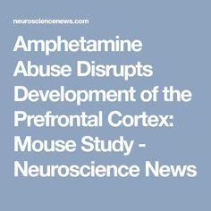 Amphetamine Abuse Disrupts Development of the Prefrontal Cortex: Mouse Study - Neuroscience News