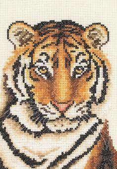 Mercerie Tiger Portrait