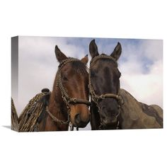 Global Gallery Horses Pair Belonging To Chagras Andes Mountains Ecuador Wall Art - GCS-453134-1218-142