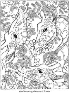 Pin For Later 50 Printable Adult Coloring Pages That Will Make You Feel Like A