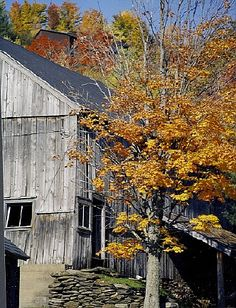 Old Barn Bathes In Colour, Vermont