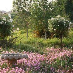 Guldenvrug Farm garden