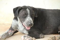 Benny is one of the dogs that most underscores the importance of the Soi Dog's Sponsors Club. Please consider joining Soi Dog's Sponsor's Club and sponsoring a dog like Bennie today by visiting: https://soidog.org/en/sponsor-a-dog-or-cat/