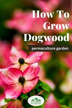 Dogwood Shrubs should not be missing in your garden.The Flowering dogwood tree or the red twig dogwood are beautiful and easy to grow shrubs Dogwood Shrub, Red Twig Dogwood, Dogwood Trees, Flowering Shrubs, Trees And Shrubs, Beautiful Gardens, Beautiful Flowers, Landscape Curbing, Plant Guide