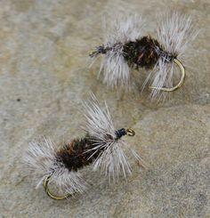 gray uglies for Colorado fishing