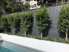This new pool sits against a backdrop of Ficus hillii under-planted with Rosemary officinalis prostrate which will begint to cascade over… Outdoor Landscaping, Outdoor Patios, Landscaping Design, Pool Builders, Pool Decks, Yard Design, Ficus, Garden Styles, Fresh Water