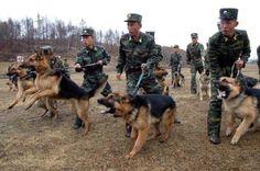 """Nenhum país tem direito de levar Ásia ao caos"""", diz China!"""
