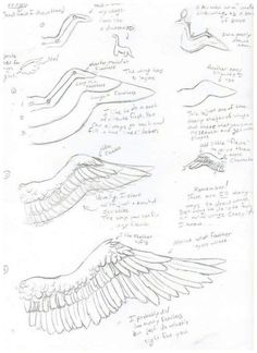 Marvelous Drawing Animals In The Zoo Ideas. Inconceivable Drawing Animals In The Zoo Ideas. Drawing Poses, Drawing Tips, Drawing Reference, Drawing Sketches, Angel Wings Drawing, Wings Sketch, Poses References, Drawing Techniques, Art Tips