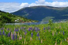 Olden, Nordfjord, Norway | Flickr - Photo Sharing!