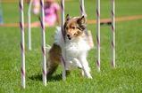 Dog Agility, The Dog Training Center LLC Pueblo West, CO Home