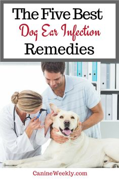 The Five Best Dog Ear Infection Remedies Dogcare Doghealth Ear Infection Remedy, Dogs Ears Infection, Doterra, Dog Ear Cleaner, Tiny Dog Breeds, Dog Nutrition, Best Dog Training, Brain Training, Dog Care Tips