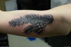 pine branch tattoo