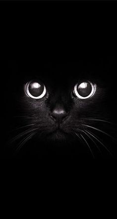 www.wallpaper-box.com smartphone wp-content uploads 2015 01 Black-Cat-Staring-Eyes-.jpg