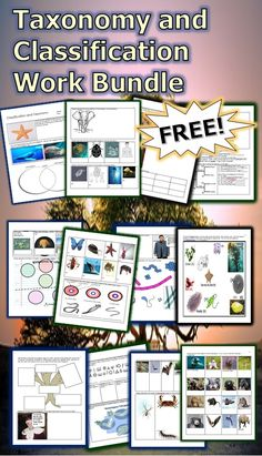 Kingdom Classification Worksheet Answers or This is A Free 27 Page Homework or Classwork Bundle About Taxonomy Science Resources, Science Lessons, Science For Kids, Science Activities, Science Projects, Teaching Resources, 7th Grade Science, Science Biology, Teaching Biology